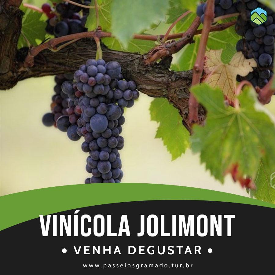 Read more about the article Ingresso Vinícola Jolimont com Degustação + Presente Especial