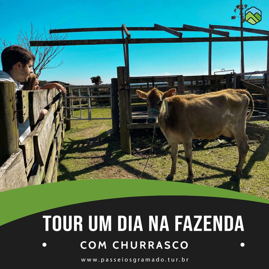 Read more about the article Tour Um dia na Fazenda com Churrasco